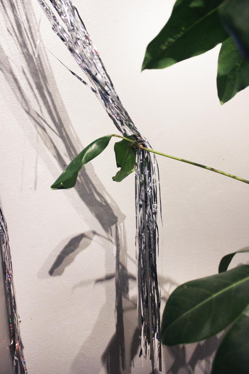 silver-plant